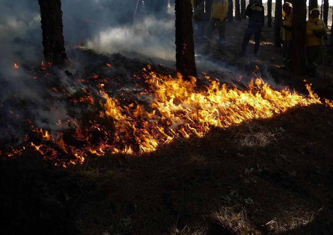 Incluso con los incendios, el objetivo es ayudar al planeta a reencontrar el equilibro que le hemos obligado a perder