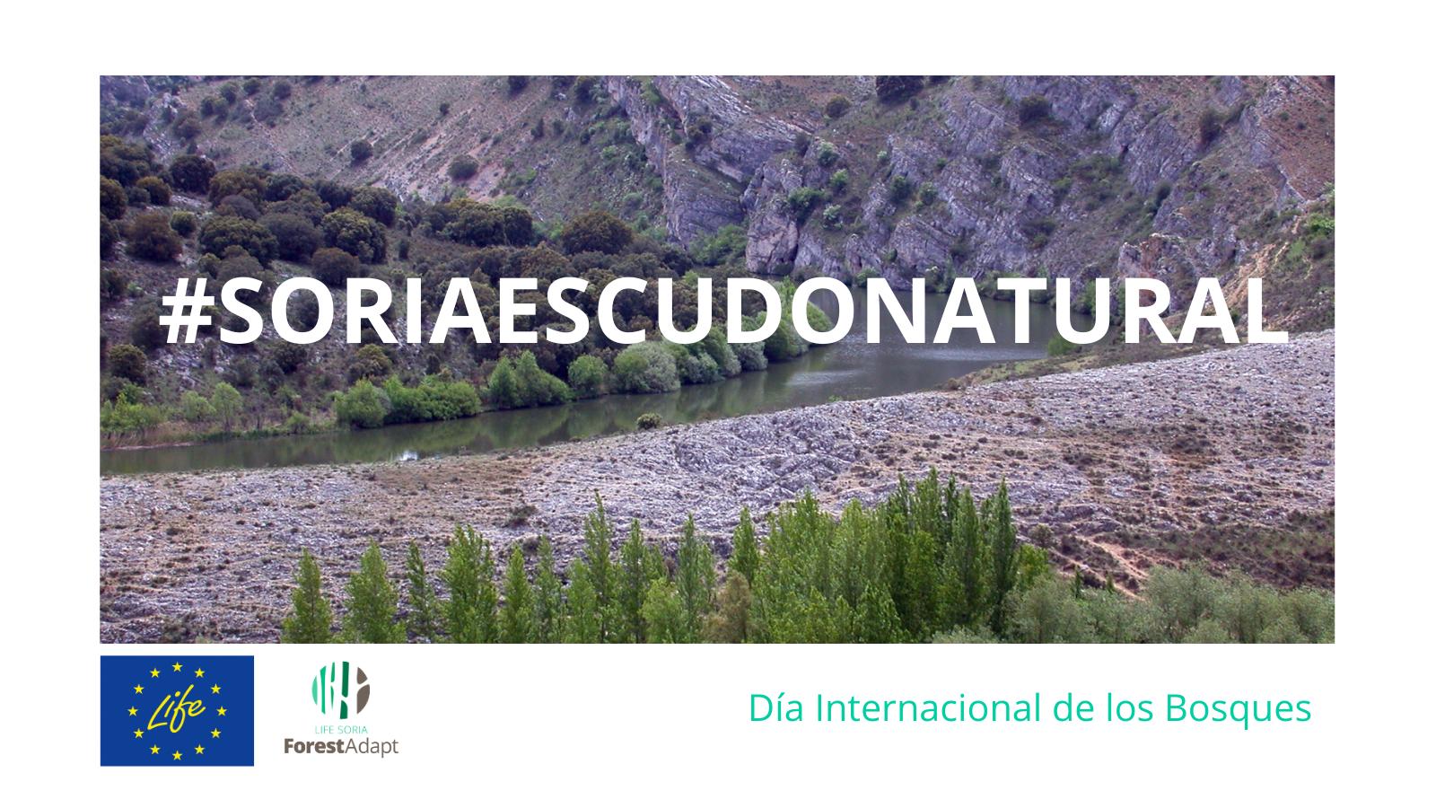 SoriaEscudoNatural